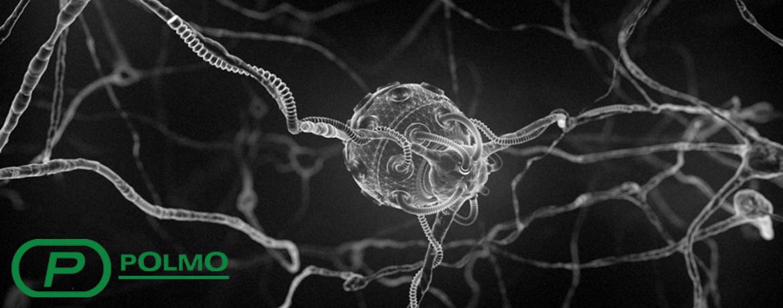 доверие нервные клетки